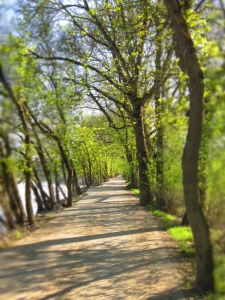 photo - path shady-path-1423685-m