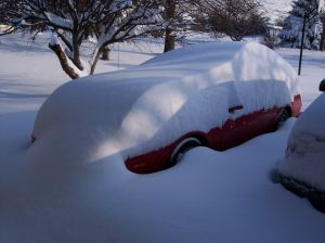 photo - car in snow-bird-521319-m